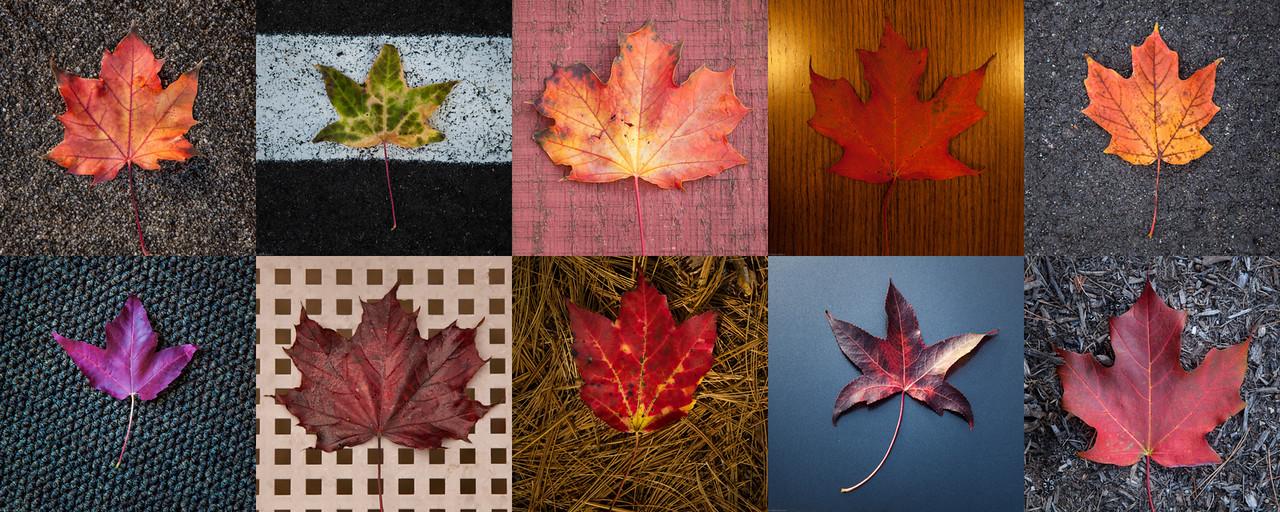 Leaves Montage