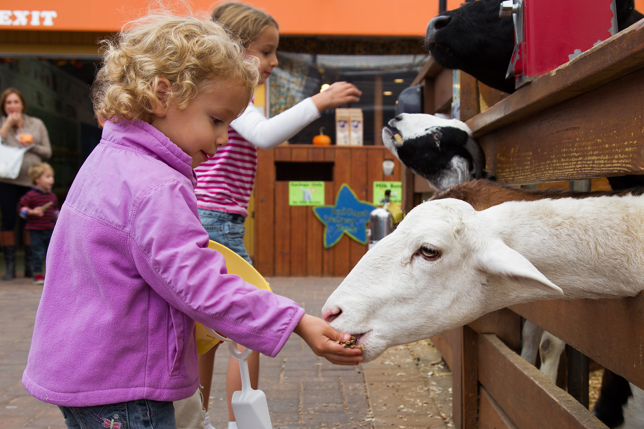 Kids love feeding the animals