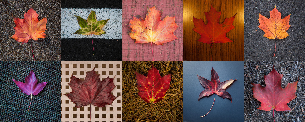 Leaves Montage