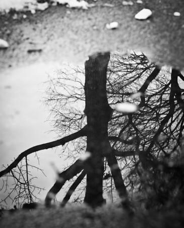 Central Park on 1/1/11