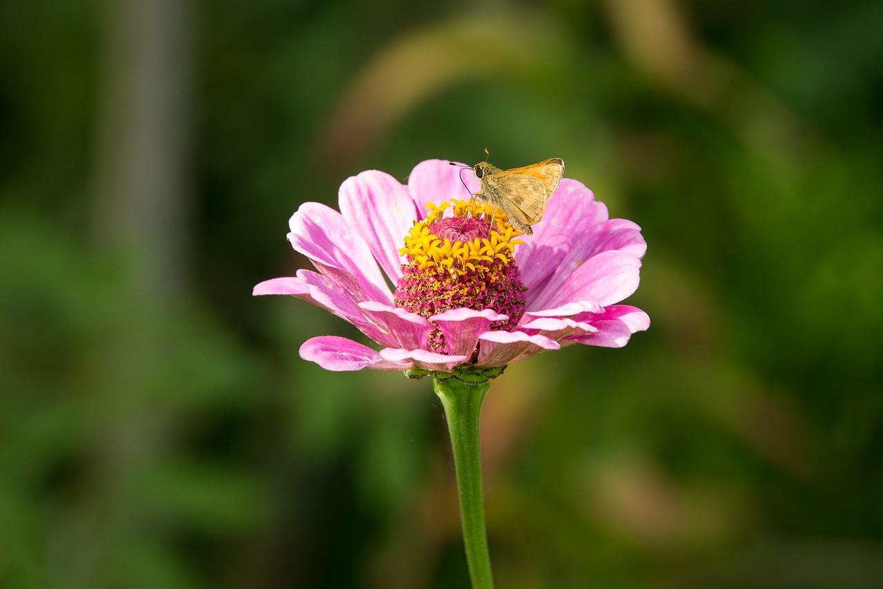 Resting Flower